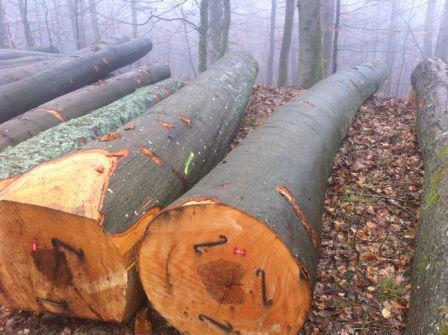 cumpără European Beech Round Logs