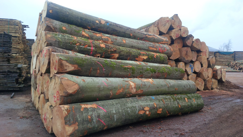 cumpără Buy Top Grade A/B/C Quality Fresh Cut Beech Logs