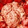 cumpără Creier de vita