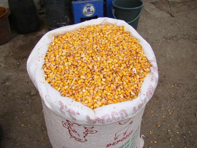 cumpără Vand porumb 0,97 lei la tir minim 12 t la saci sau 25 t la bascula