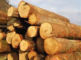 cumpără Busteni de stejar
