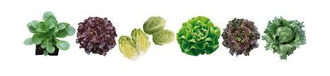 cumpără Seminte legume