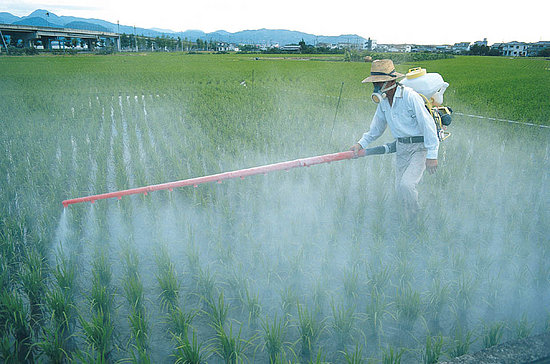 cumpără Pesticide