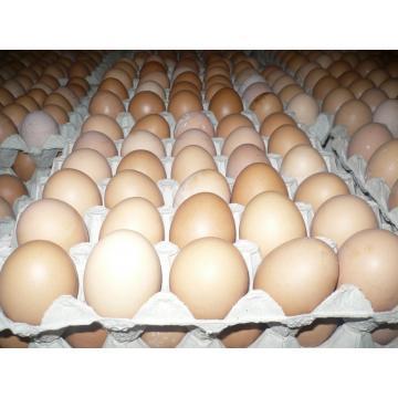 cumpără Oua consum
