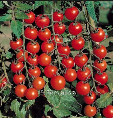 cumpără Rosii cherry