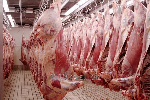 cumpără Carcase porc