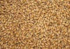 Barley Whole