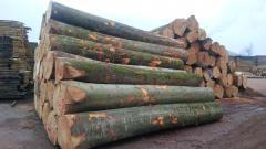 Buy Top Grade A/B/C Quality Fresh Cut Beech Logs