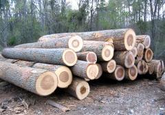 Beech, Poplar Wood Logs and lumber Best Price