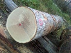 European white oak logs