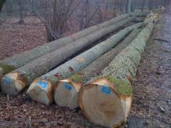 Oak logs and lumber/boards/timber for sale