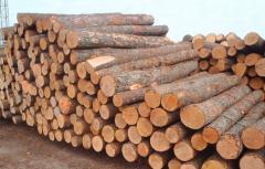 Eastern white pine logs