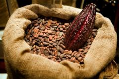 Cacao naturala