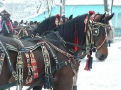 Capestre pentru cai