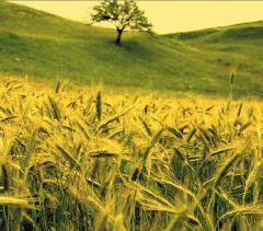 Сereale ecologice