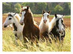 Premix vitamino-mineral (1%) pentru cabaline