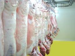 Carcass lamb