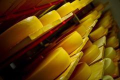 Culturi lactice liofilizate