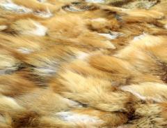 Baldine vulpe