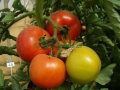 Seminte agricole