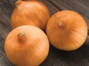 Seeds of onion