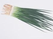 Seminte ceapa verde Totem F1 ( Allium Fistulosus )