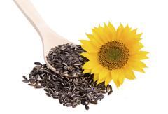 Seminte de floarea soarelui Monsanto