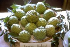 Cherimoya - Fructe tropicale import
