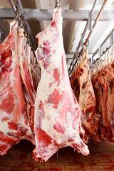 Carcasa de bovina