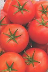 Seminte tomate nedeterminate Preciosa F1