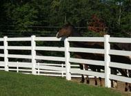 Gard pentru Herghelie