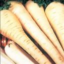 Seminte de legume - White Gem