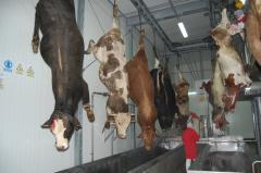 Piei de bovine