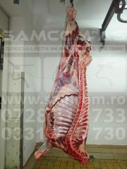Carne de vita - carcasa