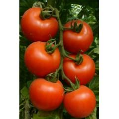 Lady Roza of tomatoes seeds of 1000 Sem