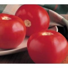 Seminte Tomate Bobcat 1000 Sem