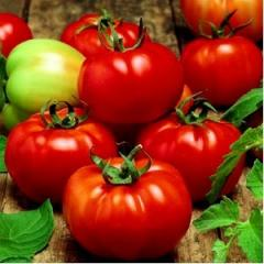 Seminte Tomate Sultan F1 5 Gr