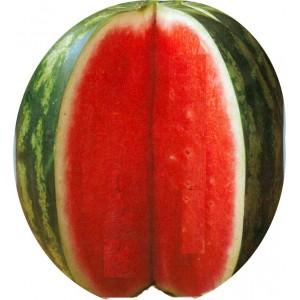 Seminte Pepene Crimson Sweet  1000 sem