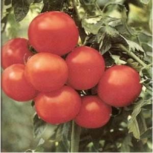 Seminte Tomate Margarita 500 Sem