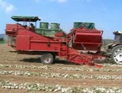 Maşini de recoltat ceapă