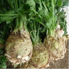 Seeds of celery