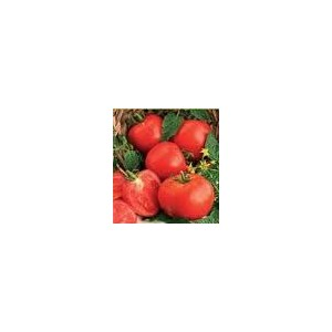 Seminte Tomate Ghittia 3000 Sem
