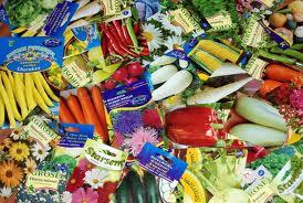 Seminte de legume