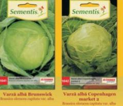 Seeds of red headed cabbage