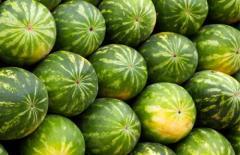 Dried melon