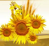 Overdone sunflower oil