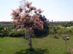 Trees, decorative