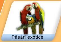 Exotische vogels