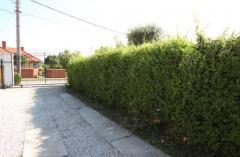 Garduri de gradini