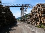Productie lemn